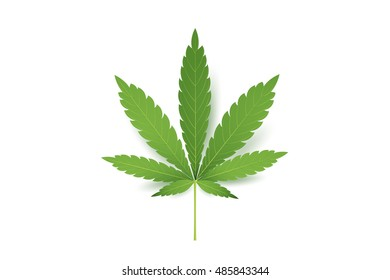 Realistic Marijuana leaf icon. Isolated on white background vector illustration. Medical Cannabis.