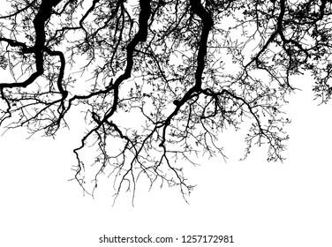 Realistic oak tree silhouette (Vector illustration).Eps10