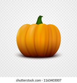 Realistic orange vector pumpkin isolated on transparent background. Single fresh vegetable close-up