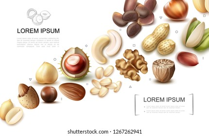 Realistic organic nuts collection with cashew pistachio chestnut macadamia nutmeg walnut hazelnut almond peanut pine brazil nuts vector illustration