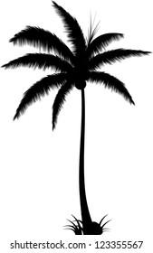 Realistic Palm Tree Silhouette