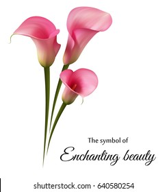 Realistic pink calla lily. The symbol of Enchanting beauty.