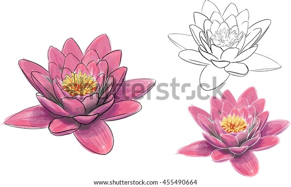 Realistic Pink Lotus Flower Watercolour Aquarelle Stock Vector