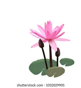 realistic pink lotus(water lilly) vector on isolated background.