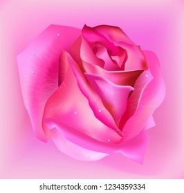 Realistic pink rose flower on light pink background. Vector.