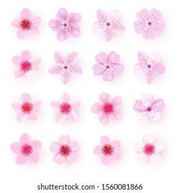 Realistic pink sakura petals icon set. Cherry flowers. Gradient mesh 3d cherry petals. Vector illustration.