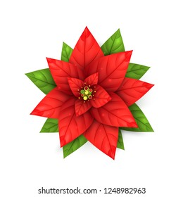 Realistic Poinsettia Flower. Red blossom Star plant for Merry Christmas and Happy New Year holidays decoration. 3d Bethlehem Star for Xmas winter sales, discount and greeting cards, web posters