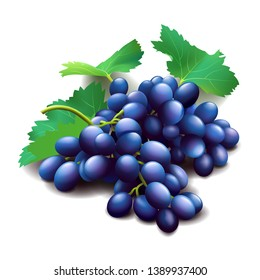 Realistic purple grapes bunch with green leaves isolated on white, fresh fruit, wine grapes, vector illustration