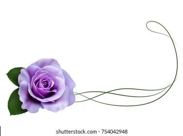 Realistic purple rose, border.