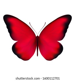 Realistic red butterfly isolated on a white background. Beautiful vector illustration - view from above. Design for paper, baners, t-shirts, logos and more.