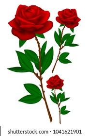 Realistic red rose collection isolated on white