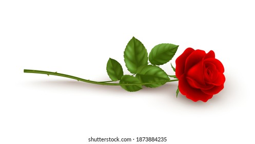 Realistic red rose lying on white background. Vector illustration EPS10