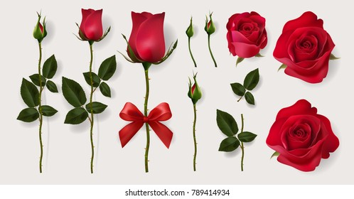 Realistic of red roses and leaves for decorate artwork for Valentine or Wedding Invitation card. Eps.10