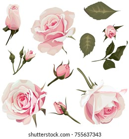 Realistic Roses Vector Clip Art Pink Flower image