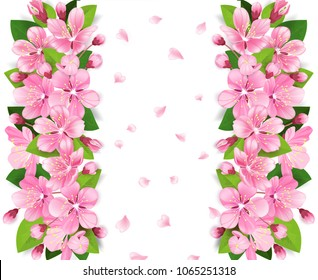 Realistic sakura japan cherry or apple tree branch with blooming flowers. Pink flowers border with falling petals on white background. Vector illustration