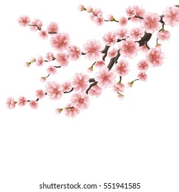 Realistic sakura japan cherry branch with blooming flowers. Nature background with blossom branch of pink sakura flowers. Template isolated on white background. EPS 10 vector file included