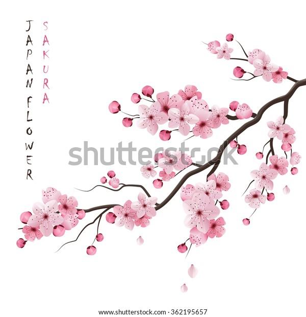 Реалистичная сакура японская вишня ветвь с цветущими цветами векторная иллюстрация
