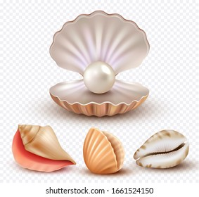 Realistic seashells. Mollusk shells ocean beach objects luxury pearls open concha vector collection