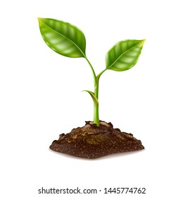 Realistic seedling growing in soil. Small green sprout with green leaves. Symbol of development, organic agriculture, natural products. Vector gardening plant, symbol of ecology. 3d sapling