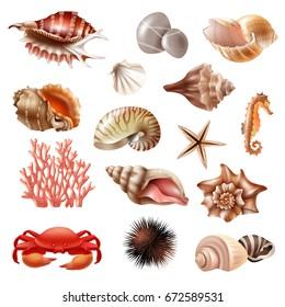 Aquatic Animal Images, Stock Photos & Vectors   Shutterstock