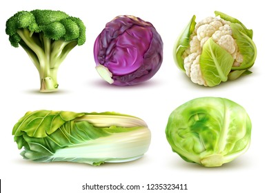 Realistic set with fresh white cabbage broccoli chinese leaves cauliflower isolated vector illustration