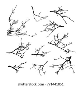 Realistic set of tree branches silhouette (Vector illustration)eps10