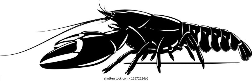 Realistic signal crayfish black and white isolated illustration, one big freshwater North American crayfish on side view, Europe invasive species