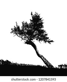 Realistic silhouette of the southern tree (Vector illustration) .Eps10