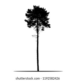 Realistic silhouette of tree - pine with branches and needle - isolated vector on a white background