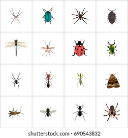 Realistic Spider, Damselfly, Grasshopper And Other Vector Elements. Set Of Insect Realistic Symbols Also Includes Damselfly, Midge, Ant Objects.