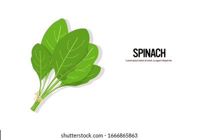 realistic spinach tasty fresh herb green leaves healthy food concept horizontal copy space vector illustration