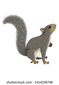 Realistic squirrel with fluffy tail that looks up. Vector illustration, isolated, white background.