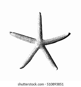 realistic starfish. insulated. logo, symbol, icon. vector illustration.