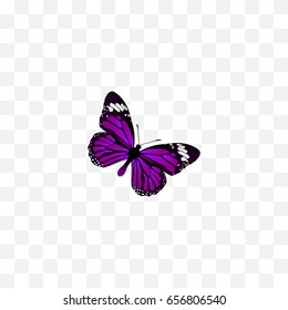 Realistic Summer Insect Element. Vector Illustration Of Realistic Butterfly Isolated On Clean Background. Can Be Used As Butterfly, Purple And Beautiful Symbols.