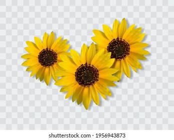 Realistic sunflower bouquet, sunflower flowers. Seasonal sales.