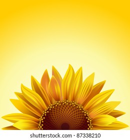 Realistic sunflower on a sunny background with copy space