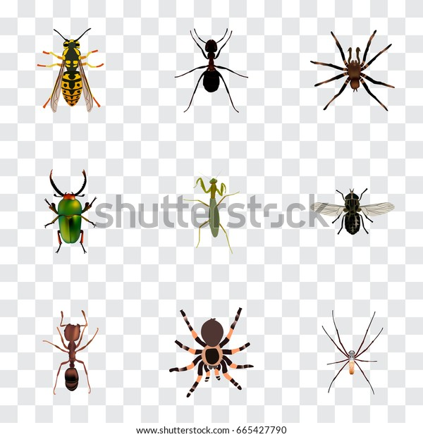 Realistic Tarantula, Arachnid, Bee And Other Vector Elements. Set Of Insect Realistic Symbols Also Includes Beetle, Spider, Tarantula Objects.