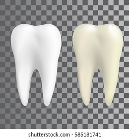 Realistic teeth in two colors white and natural. Poster Transperent, tooth Icon