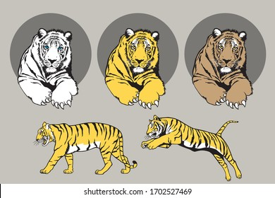 Realistic tiger vector illustration With lines and colors that are clear and realistic details, Collection set for use illustration vector and simple design.