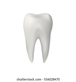 Realistic tooth. vector illustration
