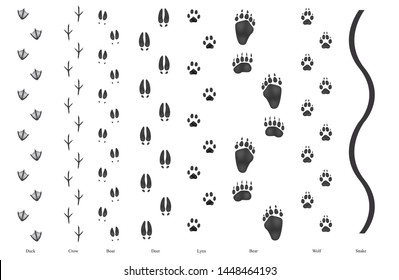 Realistic trail of sylvan wild birds and animals:  duck, crow, boar, bear, wolf, lynx, deer and snake