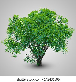 Realistic Tree | EPS10 Vector