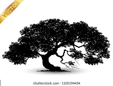 Realistic tree silhouette isolated on white background.