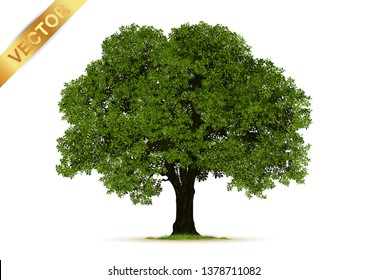 Realistic  Trees Isolated on White Background.