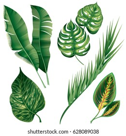 Realistic tropical botanical foliage plants set of green banana palm monstera croton chamaedorea isolated vector illustration