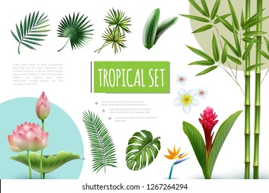 Realistic Tropical Plants Collection