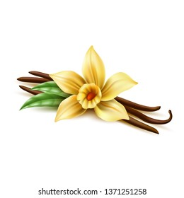 Realistic vanilla flower with dry sticks, green leaves. Vector yellow orchid blossom with vanilla pod beans. Aromatic flavor, natural condiment. Delicious cooking ingredient. 3d indian seasoning