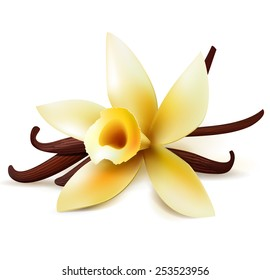 Realistic vanilla flower and pods, vector isolated objects on white background