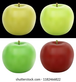 Realistic vector apple illustration in 4 colors, on black and white isolated background, eps 10.