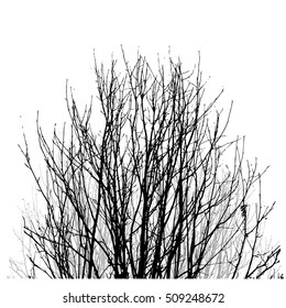 Realistic vector black silhouette of tree bare branches without leaves on a white background. Lifeless naked bush, shrub with fallen leaves